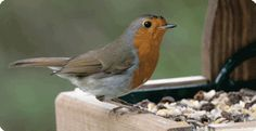 A bird table does not need to be complicated – the birds are only interested in a good supply of food in a safe, sheltered place.
