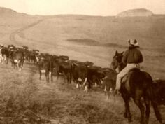 The Goodnight-Loving Trail was one of many cattle trails in the American West. The Goodnight-Loving Trail was one of many cattle trails in the American West. Texas History, Us History, American History, Gaucho, Old West, Sheriff, Old Photos, Old Pictures, Charles Goodnight