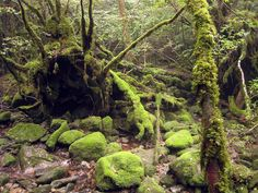 Shiratani Unsuikyo ravine. A beautiful nature preserve with great hiking trails through beautiful primeval forests.