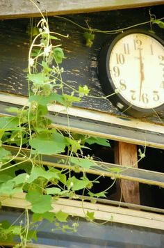 Dads clock and native grapevine