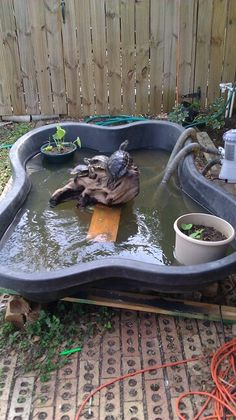 First turtle pond. Craigslist special. Lol KELVIN we should keep checking Craigs list! maybe score a pond for free!