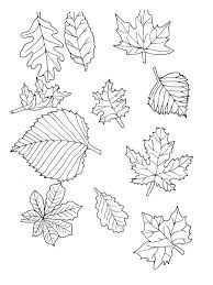 Google Image Result for http://kidscolorful.com/wp-content/uploads/2013/12/amazing-leaves-coloring-pages--printable-and-you-can-print-it.jpg...