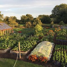 Garden Landscaping Terraces Another lovely evening, bed on right was planted to rocket and mustards just 17 days ago, down August in modules Cut Flower Garden, Love Garden, Garden Ideas, Home Grown Vegetables, Farm Photo, Vegetable Garden Design, Interior Garden, Fruit Garden, Farm Gardens