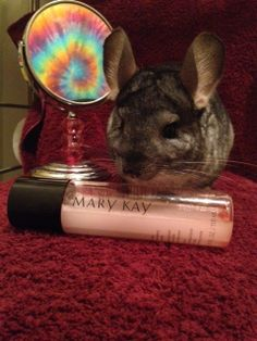 "You know the saying...""pain is beauty""?Well with Mary Kay cosmetics, no animals suffer for your beauty.  They were the first company to stop cosmetic testing on animals, in the early '70's."