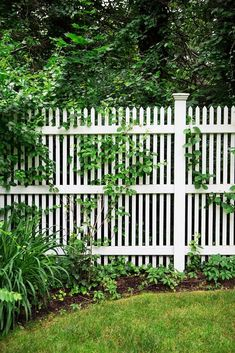 Love the tall picket fence! Maybe with wider spaces between pickets