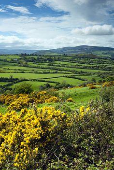 Leinster, County Wicklow, Republic Of Ireland