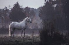 Sie fotografiert ein einziges Pferd auf dem Feld. Was sie dabei aufnimmt? Erstaunlich... | LikeMag | We Like You