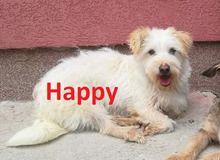 Happy Hund Bologneser Mix In Bosnien Und Herzegowina Tierheim Such Und Find Tiere