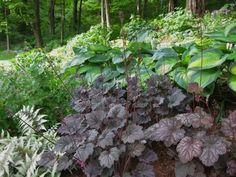 alstroemeria and hosta garden ideas - Google Search