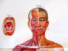 1912 corps humain anatomie torse visceres abdomen planche. Black Bedroom Furniture Sets. Home Design Ideas