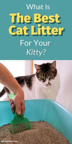 Finding what is the best cat litter for you and your cat is essential. Whether your feline frend goes outside or not, a litter box is an important item in the home. Discover a variety of cat litters to get you started, including pros and cons of each. #catlitter #bestcatlitter #bestlitter #bestlitterforcats Diy Litter Box, Best Litter Box, Cat Care Tips, Crazy Friends, Crazy People, Go Outside, Cat Life, Cat Toys
