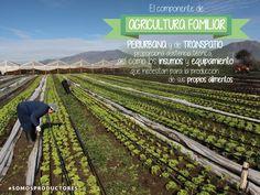 El componente de agricultura familiar periurbana y de traspatio proporciona asistencia técnica, así como los insumos y equipamiento que necesitan para la producción de sus propios alimentos. SAGARPA SAGARPAMX #SomosProductores