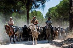 Saca de las Yeguas 2006 & 2007 - Round up of the Wild Horses, Romeria del Rocio, Seville, Spain, http://www.wildscope.com/Spain/Saca-de-las-Yeguas-2006-07.html
