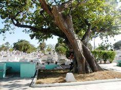Abrazo de árbol desde La Habana