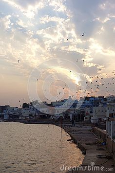 A view of Pushkar Lake in Rajasthan during a stunning golden sunset with many pigeons flying in the brilliant light with divine clouds in the background. Lake View, Pilgrimage, Pigeon, Clouds, India, Stock Photos, Sunset, Places, Sunsets