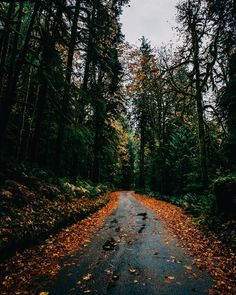 Forest Path - Washington /  by Forrest Mankins