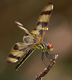Dragonfly.  Go to www.YourTravelVideos.com or just click on photo for home videos and much more on sites like this.