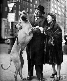 Metropolitan Opera's Helden tenor Lauritz Melchior with his wife, petting his Great Dane dog on street. NY, 1944;  by Nina Leen.