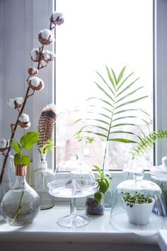 Margo loves the shapes of the plants and leaves around her home: 'They're like natural sculptures,' she says. Displaying them in glass containers makes it easier to see the whole plant's beauty, from root to leaf.