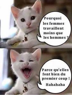 Dit is lachen ha ha ha . Funny Animal Memes, Funny Animal Pictures, Funny Photos, Funny Cats, Funny Animals, Funny Jokes, Cute Animals, Hilarious, Humor Minion