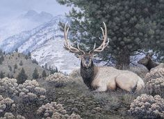 Fields Peak Elk Painting by Mike Stinnett America And Canada, North America, Canyon City, Walking Sticks, Elk, Beautiful Creatures, Fields, Studio, Carving