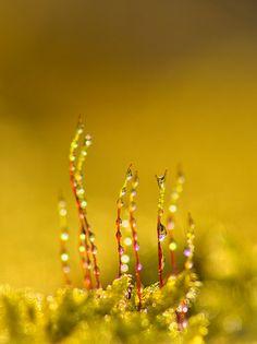 wet tree moss by zoomyboy.com