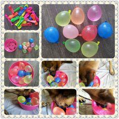 Spel 42 (hondenspel hond spel denkwerk hersenwerk brain dog game play diy) www.facebook.com/denkspellenvoorjehond