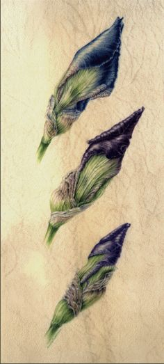 Annie Patterson - stages of a flowering blooming; take pictures and do studies, small squares, Polaroids?