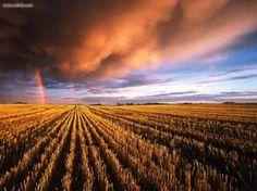 Stubble field, Saskatchewan.