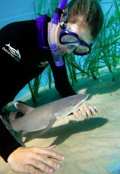 A Discovery Cove shark expert gets a close-up view of a new shark pup. Orcas, Save The Sharks, Types Of Sharks, New Shark, Megalodon, Ocean Creatures, Shark Week, Baby Shark, Sea World