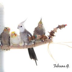 É muita fofura! Linda foto da Fabiana Guimarães do My Dear Pet! Veja esse e outros brinquedos em nosso site: http://guarubatoys.com.br/pro…/poleiro-com-brinquedo-arvore/
