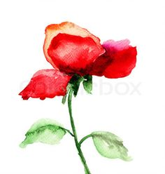 Red Rose flower | Stock Photo | Colourbox on Colourbox