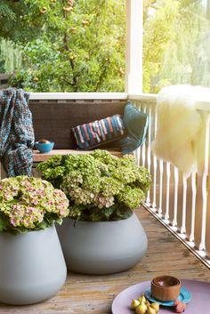 Hortensias Magical Four Seasons pour mettre en couleur votre jardin.