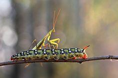 Riding on a caterpillar by Vadim Trunov, via 500px