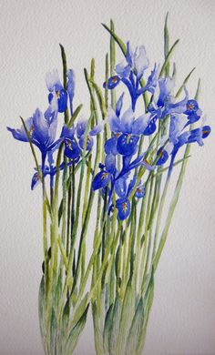 Blue Iris  (Watercolour) Helen Miles