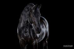 Pferde im Studio - Monika Bogner Photography Some Beautiful Images, Black Is Beautiful, Pretty Horses, Beautiful Horses, Circus Aesthetic, Horse Portrait, Friesian Horse, Portraits, Draft Horses