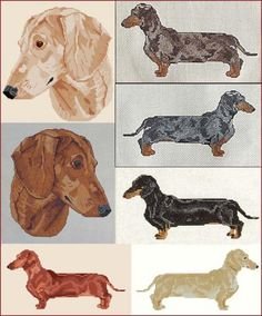 Smooth Dachshunds