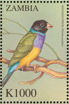 Gouldian Finch stamps - mainly images - gallery format