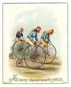 rooster bike race