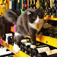 ワインとネコ1