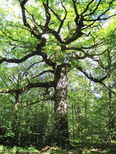 Les mystères de la forêt de Brocéliande.