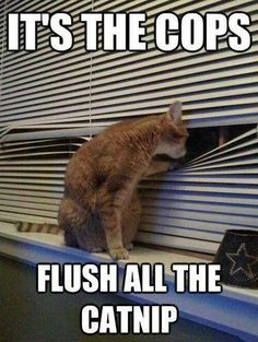 It's the Cops ... Quick Flush All the Catnip ... I'll Be the Look Out