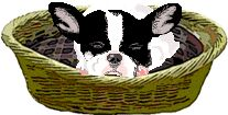 French bulldog Graphic Animated Gif - Graphics french bulldog 864081