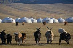 Tipici paesaggi mongoli - una pic di valmio #nomadizziamoci