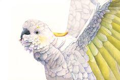 Cockatoo Watercolor Painting Print of watercolor by LouiseDeMasi