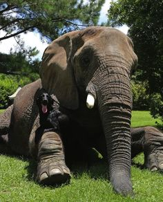 No Friendship Can Compare To This One Between A Dog And An Elephant