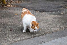 Stray cat ノラネコ 野良猫 stray cat