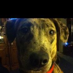 My dog nephew.