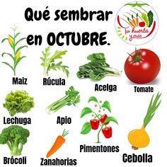 Growing Veggies, Growing Plants, Earth Bag Homes, Eco Garden, Mini Cactus, Plant Art, Green Nature, Topiary, Garden Projects