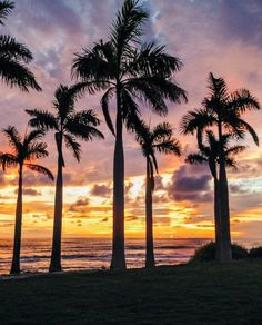 Palm Tree Grove Silhouette During A Gorgeous Sunset In Costa Rica